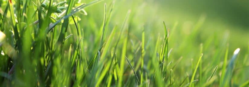 herbicide