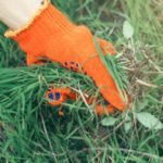 Arracher mauvaise herbe