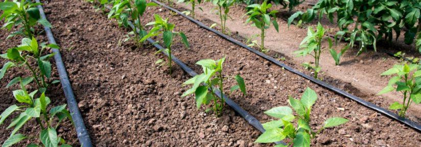 Irrigation de jardin
