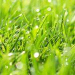 tondre pelouse humide