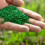 engrais naturel pour gazon