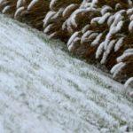 semer du gazon en hiver